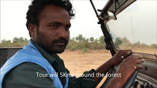 2019-Kurnool City wild  Forest park  With full of wolfs, Rabbits Peacocks & Birds