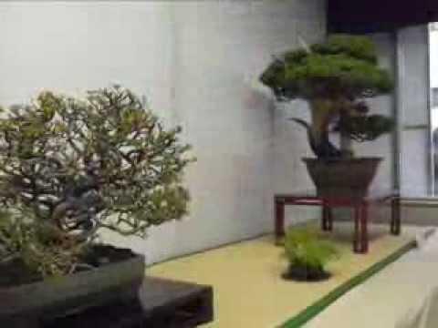 37th Tokyo Bonsai Show (Green Club, Tokyo)- Dec 2011