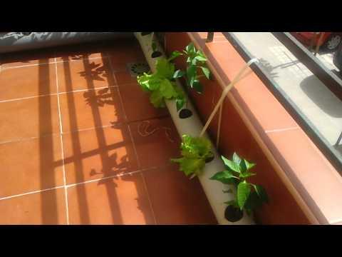 Cultivo hidroponico casero youtube for Cultivo interior casero