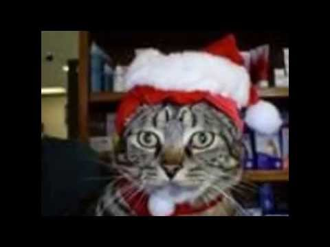 Thumbnail image for 'Winn Feline Foundation Holiday Cat Photos'