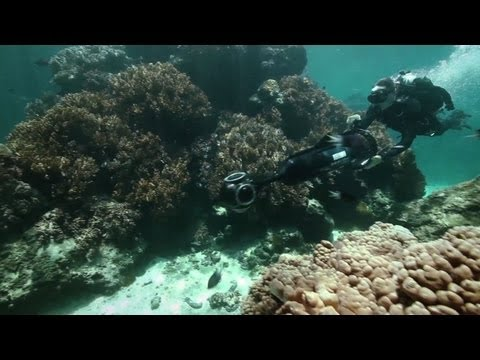 Virtual dive the Great Barrier Reef with