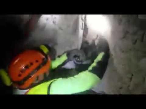 emocionante rescate de un perro atrapado entre los escombros del terremoto en italia