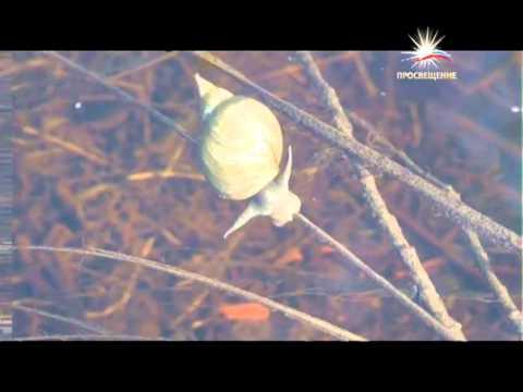 Итоги года 28 12 2012 / Телеканал «ПРОСВЕЩЕНИЕ»