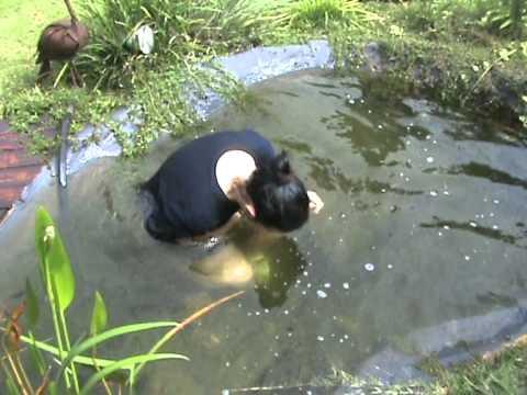 Mel takes a dip in the garden pond