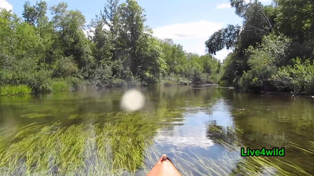 Betsie river youtube for Betsie river fishing report