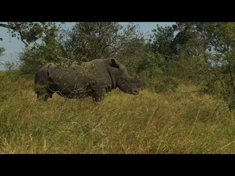 Can cross-border cooperation save the endangered rhino?
