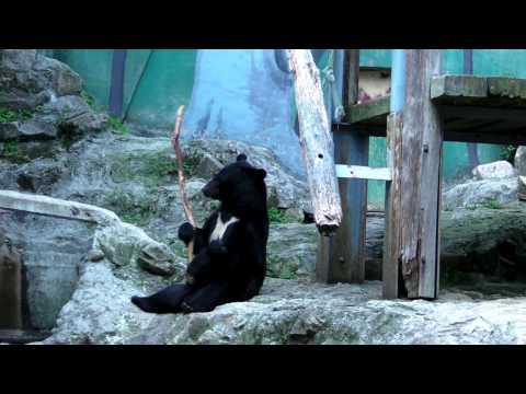 バトントワラー 熊 クラウド 安佐動物公園 カンフー