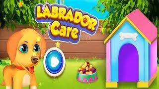 Labrador Pet Care Puppy Love Simulator Colours for Kids Animation Education Cartoon Compilation