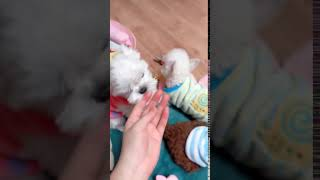 TRY NOT TO LAUGH ,Cute DOG Videos , Funny Videos 0216 1 4