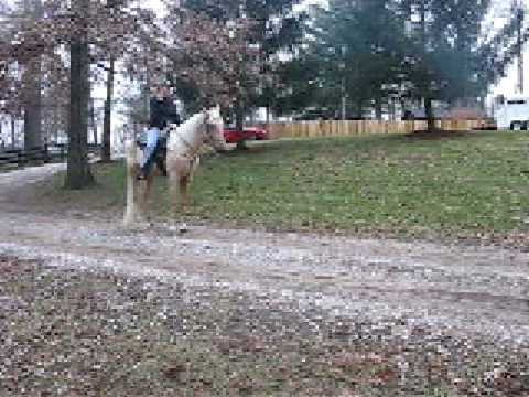 Walking and is in the Walking Horse KEEPS program -