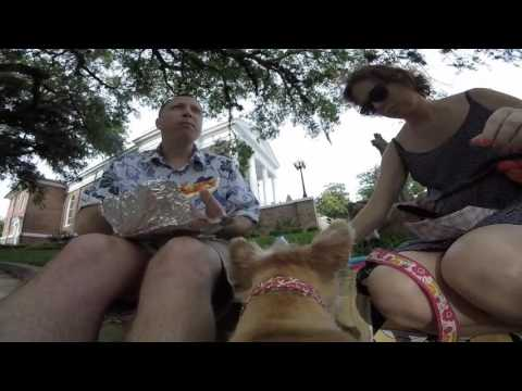 Shrimp Festival - Fernandina Beach - 2016 (Our Dog's Perspective)