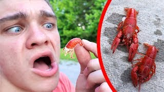 Are Crawdads Even Edible??? *CATCH CLEAN COOK*