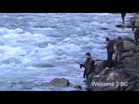Salmon Fishing in Chilliwack River, BC, Nov 8th, 2012