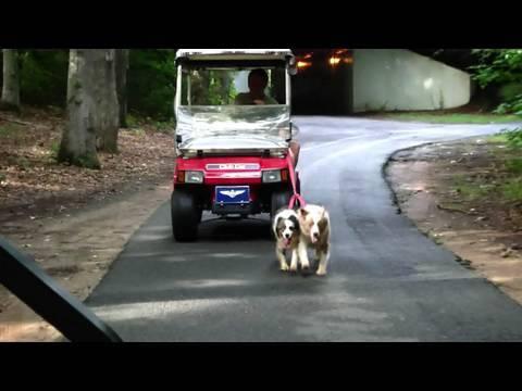 Golf Cart Dog Walk