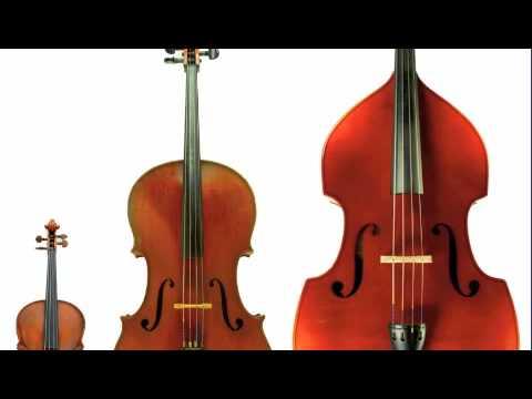 String Digital The String Family a Digital