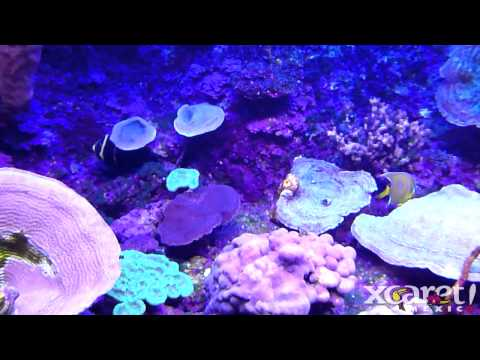 Saltwater Fish Tank Easy Or Hard Hard To Start Your Own