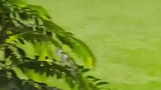 Some rare videos of 7 1 'Dhaka Gulshan attack'