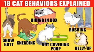 18 Strangest Cat Behaviors Explained (Jaw-Dropping Cat Facts)