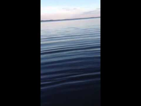 Fishin' with Lemonade - Pine Island Sound - Sprite - Quick