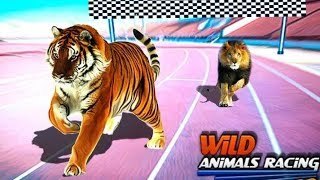 ❤️Animals Race - Kids Find Which Is The Fastest Animals in Jungle - 3D Education Gameplay Video