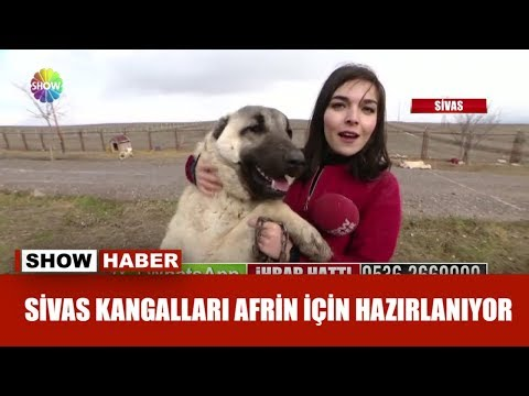 Sivas Kangalları Afrin için hazırlanıyor!