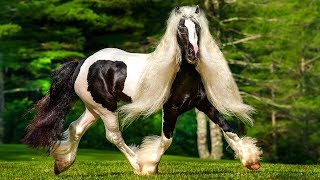 RAREST Horse Breeds In The World!