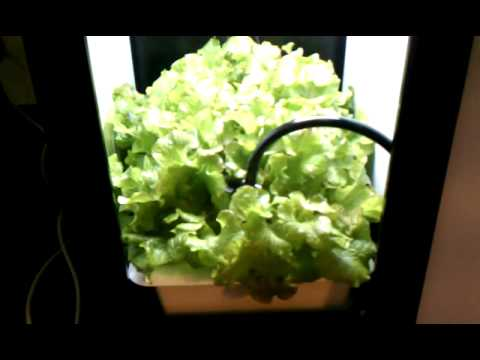 Grow Box   SuperCloset Hydroponic Box Week 2
