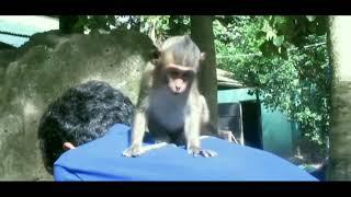 New video of baby monkey Lori. 😊 🙂