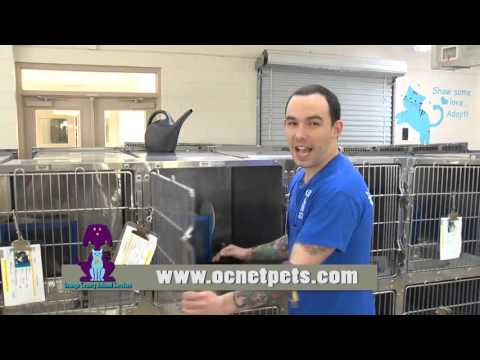 Orange County Animal Services - I Volunteer Because . . . Adam