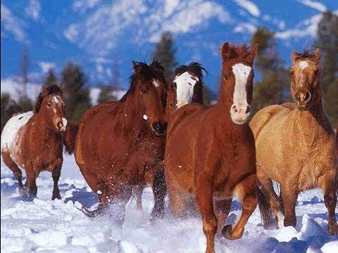 Des chevaux magnifiques youtube - Chevaux gratuits ...