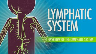 Lymphatic System: Crash Course A&P #44
