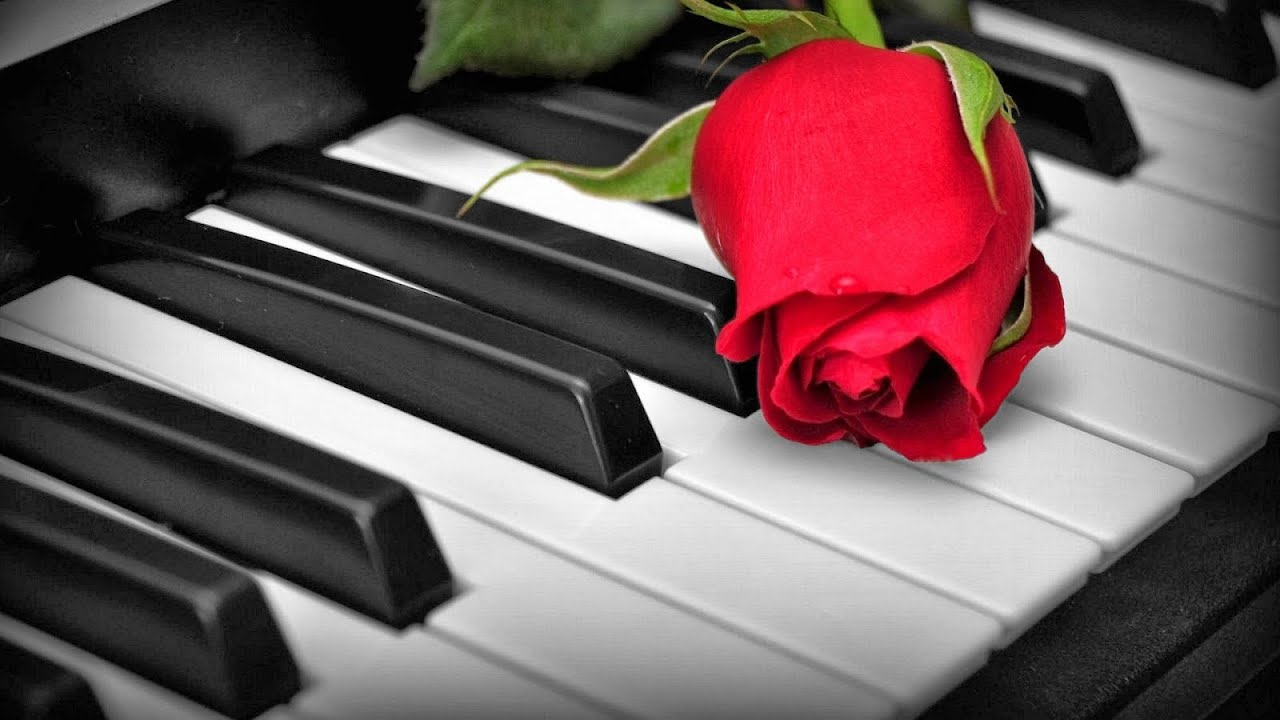 Black And White Photography Roses on Pianos Rose on a Piano Black