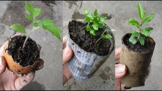 9 ways to make a super-convenient and economical seed tray for those who love gardening (part 1)