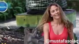 Sapık maymun lar