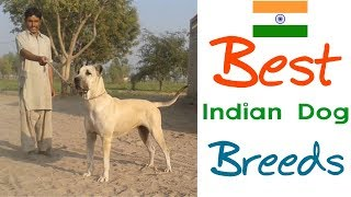 Top 5 Great Indian Dog Breeds   #BestBreedsFromIndia   Part-1