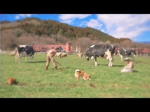 【3DS】『牧場物語 3つの里の大切な友だち』紹介映像第2弾が公開