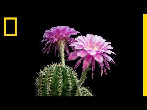 植物の花が咲く美しすぎるタイムラプス映像♪