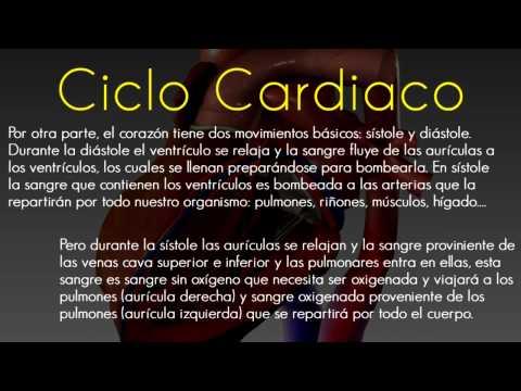 Corazon - Generalidades [Concepto, Ciclo Cardiaco, Valvulas Cardiacas y Pericardio]
