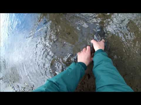 Small Stream Fishing Big Wild Brown Trout in Western New York