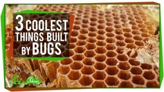 The 3 Coolest Things Built By Bugs
