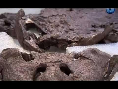 Загадки доисторических животных, Франция, 2010