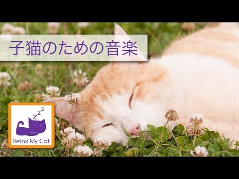 Music For Cats 35 minutes Relax my cat Lullaby Relaxing music for cats to sleep lullabies for cats