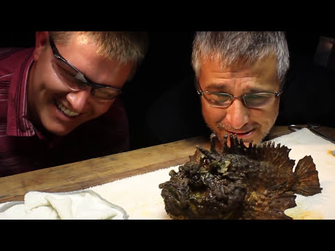Milking the WORLD'S MOST VENOMOUS FISH! - Smarter Every Day 117