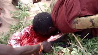 ලේ බොන ගෝත්රිකයෝ ******(සංවේදී අය බලන්න එපා )Turkana Man Drinking blood