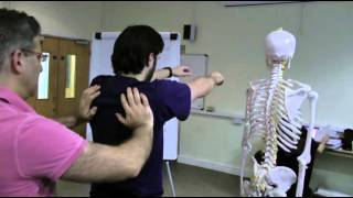 Scapular and shoulder motion