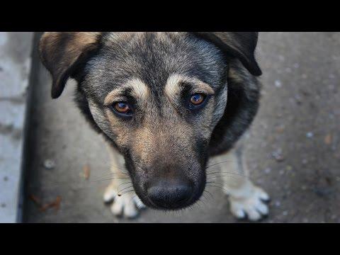 Социальный ролик: Помощь бездомным собакам.