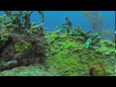 Lots of Fish Next to MV Emperor