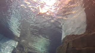 Funny Penguins diving and swimming underwater at Seaworld Orlando