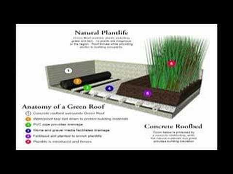 Green Roofing - A Simple Step Toward Sustainability