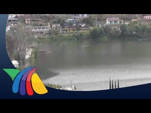 Lirio pasa de ser una plaga a composta en Valle de Bravo | Noticias del Estado de México
